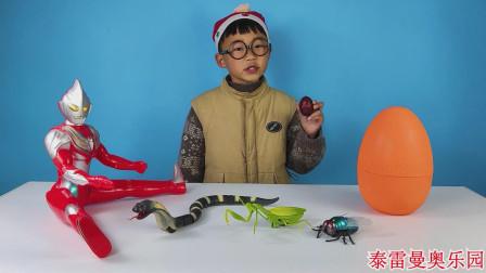 迪迦给小泽变出恐龙蛋和螳螂玩具,恐龙蛋里还有一个遥控苍蝇玩具