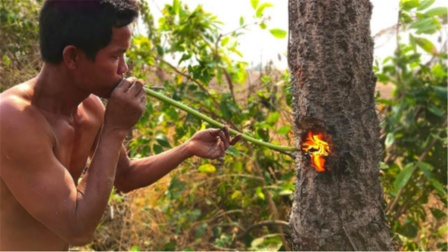 柬埔寨砍树有多先进?不用斧子和电锯,轻松放倒一棵大树!