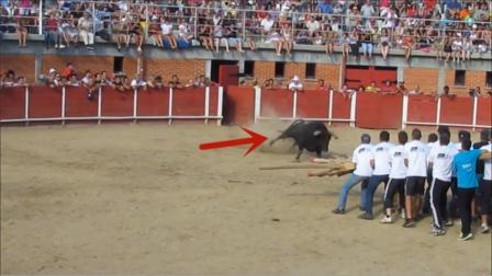 一大群人将木棍绑在一起,不断挑衅公牛!可把牛气坏了
