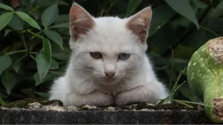 在这个国家见不到一只猫,是被人祭了五脏庙