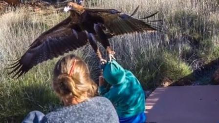 老鹰想带走小孩,结果反被家长生擒