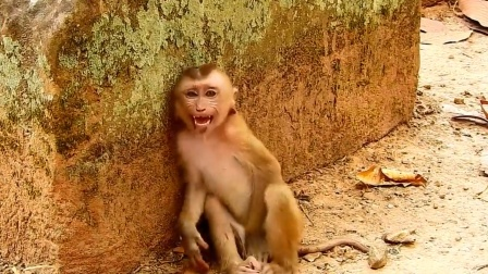 小猴子蹲在墙角不断哀嚎,它到底经历了什么