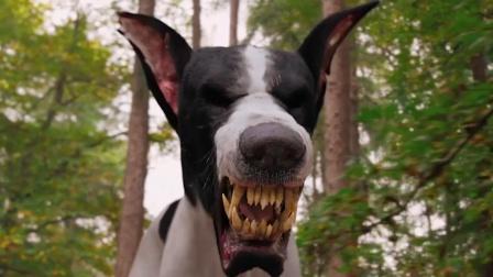 地狱恶犬来人间寻主,听到小主人喜欢蠢萌小狗后,瞬间换了副嘴脸