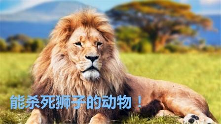 能杀死狮子的动物,一掌抓破狮子大动脉,万兽之王不过如此