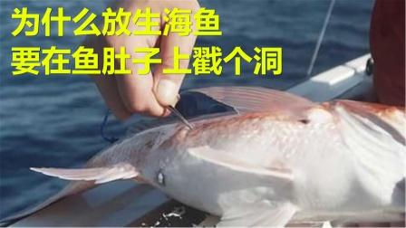 为什么放生海鱼,要在鱼肚子上戳个洞,不扎会怎么样?