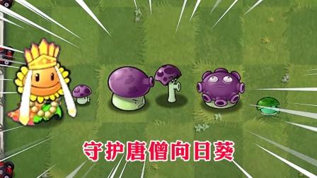 蘑菇家族能不能守护唐僧向日葵?