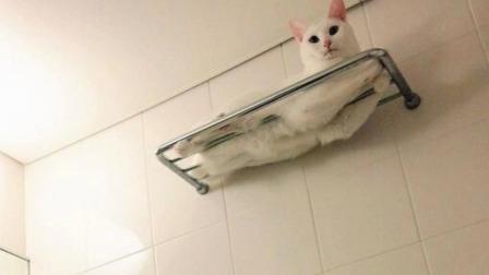 美女洗完澡后拿毛巾擦拭,结果半天拽不动,仔细一看哭笑不得