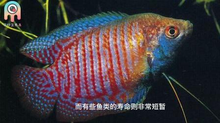 冷知识:鱼的寿命有多长?