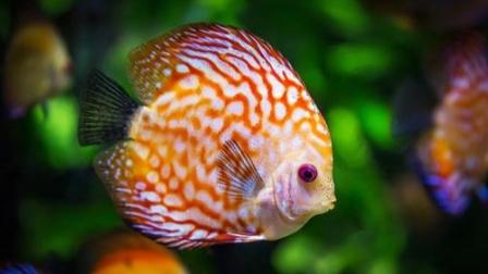 在鱼的眼睛里,世界是彩色的还是黑白的?