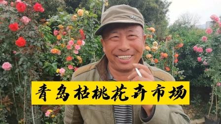 青岛这里的花卉好丰富,忍不住停下车打探一下市场行情
