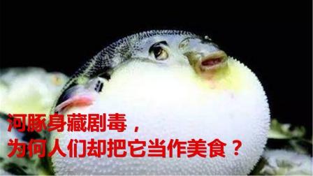 河豚身藏剧毒,为何人们却把它当作美食?中毒后会有什么反应?