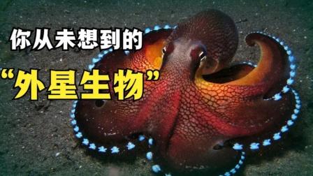 为何科学家认为:章鱼是5.7亿年前,跟随彗星降临地球的生物?