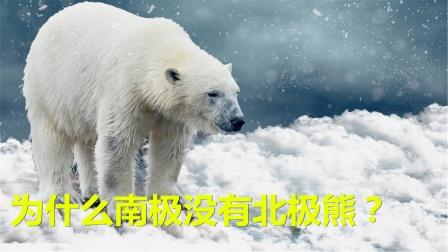 为什么南极没有北极熊?如果把北极熊送到南极,会怎么样?