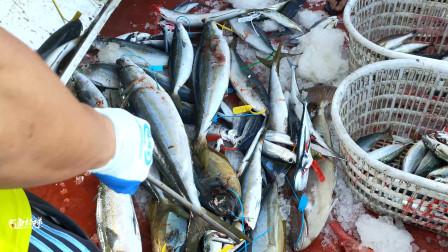 海钓返航,分鱼了,都是好货