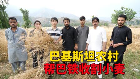 中国人来到巴基斯坦农村,帮巴铁收割小麦,没想到巴铁家这么多地