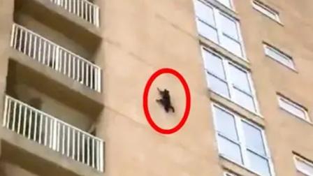 """七层高楼惊现""""大蜘蛛""""!?"""