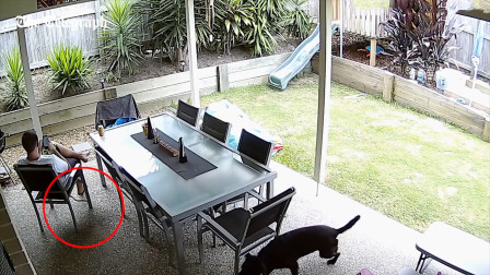 男子正在玩手机,一旁狗狗忽然发现不对劲,快速上前狂吠!