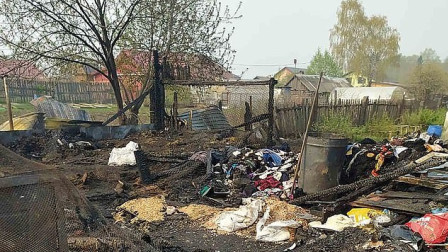 俄罗斯:一间动物收容所疑似被人纵火 30多只狗被烧死