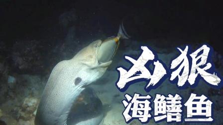 海鳝鱼捕食猎物,一看就是个狠角色!