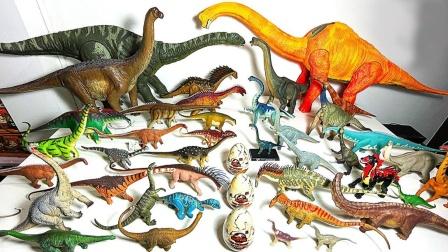 展示侏罗纪白垩纪时期蜥脚类恐龙玩具