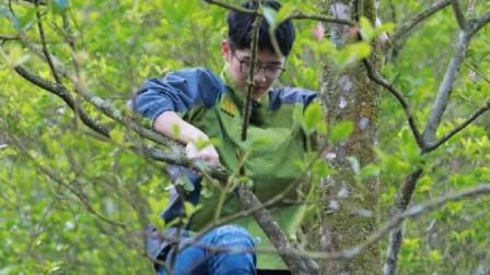 """明星""""爬树""""合集:彭昱畅上树摘椰子,刘昊然4步上树摘八角!"""
