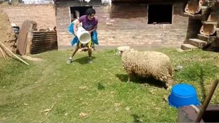 男子作死挑衅公羊,羊:我要你好看!