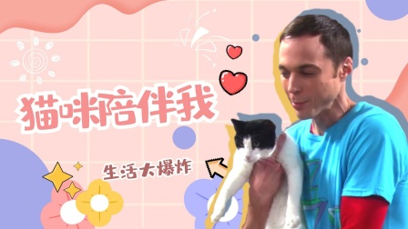 《生活大爆炸第四季》第三集:谢尔顿失恋,养猫打发无聊时间