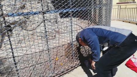锦州一位老人自备水果干粮来到公园内喂食猴子 塑料包装未取直接塞进笼子