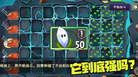 植物大战僵尸:谁能用这个植物打败僵博?拼手速的时候到了!