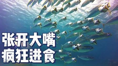 一群鱼张开大嘴,你知道在干嘛吗?