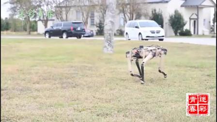 美军研制新型机器狗,草地上奔跑如飞,动作灵活敏捷