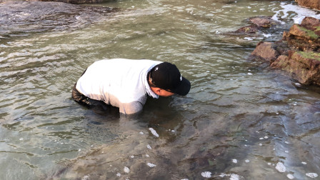 海货泛滥了,礁石下面全是靓海货,闲牛又是捡螺又是摸螃蟹好过瘾