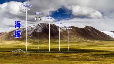 Top5地球上平均海拔最高的高原排行榜!