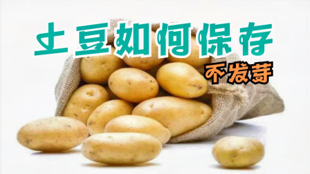 才清楚,保存土豆这么简单,只需撒一把,不发芽不发青,学会不亏