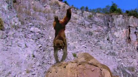 小伙一路追着猴王,它做什么就学什么,这小伙练的什么功夫呢?