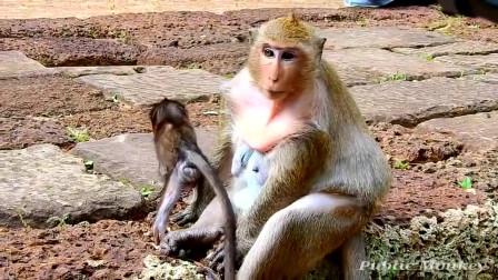 敢跟我抢吃的,找死,小猴子惨叫一声!