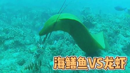 海鳝鱼想吃龙虾,结果没想到啊!