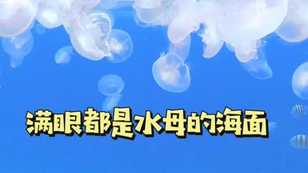 满眼都是水母的海里,真的太养眼了!