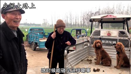 农村大娘卖稀有品种狗,一说价格大家都吓跑,都说这狗在大城市管