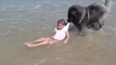 女孩被浪花拍倒,狗狗连忙叼起她往岸上拖!