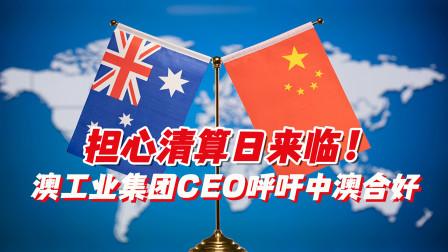 担心清算日来临!澳工业集团CEO呼吁中澳合好,赵立坚:很有价值的建议