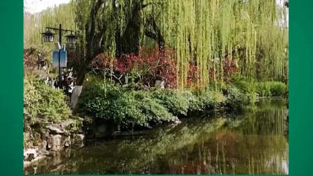 竖版短视频《济南趵突泉公园——春光无限不思归》