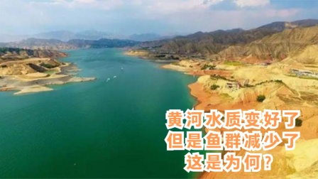黄河水质变好了,但是鱼群减少了,这是为何?