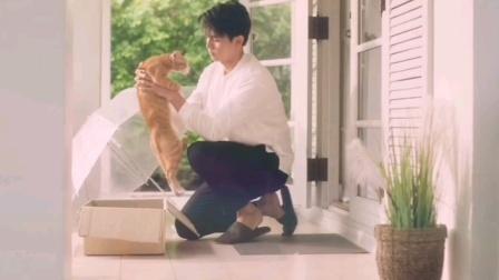 很温馨的小剧,将流浪猫拟人化,展示出人与猫之间的温暖与酸楚