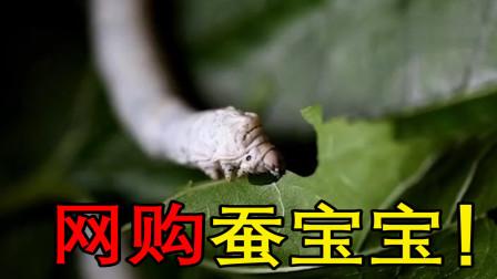 """网购了15只有趣的生物""""蚕宝宝"""",要照顾它们吃喝拉撒"""