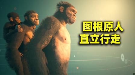 穿越到700万年前,进化到图根原人,我学会了直立行走