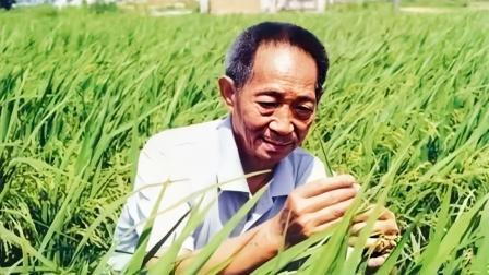 杂交水稻之父#袁隆平逝世