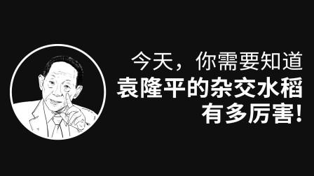 你需要知道袁隆平的杂交水稻有多厉害!