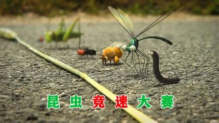 一场昆虫竞速大赛,太搞笑了,治愈系短片