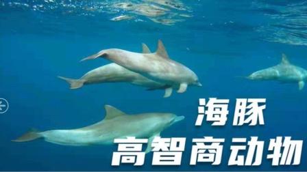 高智商的海豚似人类,繁衍过程很残忍,动物界的聪明物种